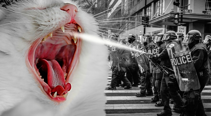 Protesto animal